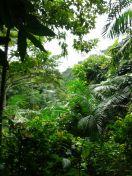 La jungle fait peur, car elle nous confronte à la réalité : ici, l'Homme n'est plus au sommet de la chaîne alimentaire...